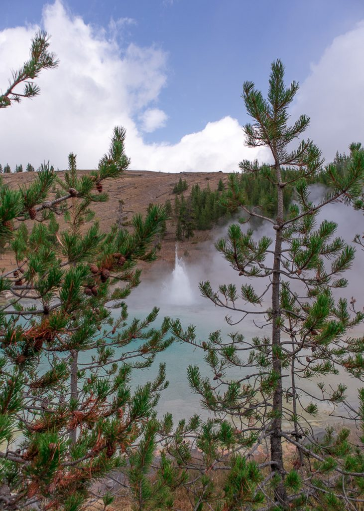 Imperial geyser in Yellowstone